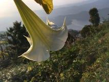 Nascer do sol acima das montanhas Himalaias - vista de Sarangkot, Nepal Imagem de Stock