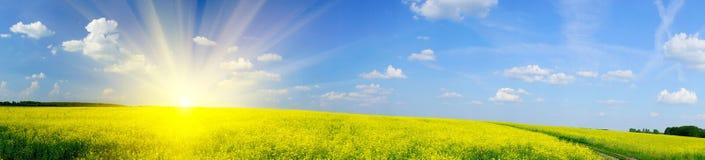 Nascer do sol acima do rapefield em a primavera. Fotografia de Stock
