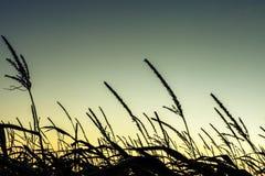 Nascer do sol acima dos campos de milho Fotografia de Stock