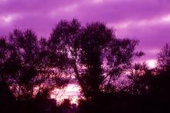 Nascer do sol do amanhecer da mola no distrito do waikato de Nova Zelândia fotografia de stock