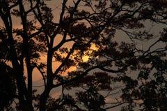 Nascer do sol atrás da árvore Fotografia de Stock
