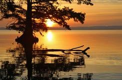 Nascer do sol atrás da árvore de Cypress fotos de stock royalty free