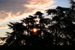 Nascer do sol atrás das árvores fotografia de stock royalty free