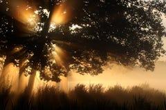 Nascer do sol atrás das árvores em uma manhã foto de stock