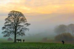 Nascer do sol através da névoa fotos de stock royalty free