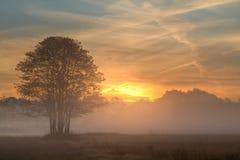 Nascer do sol através da névoa Imagem de Stock Royalty Free