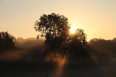 Nascer do sol através da névoa e das árvores Fotografia de Stock