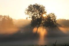 Nascer do sol através da névoa e das árvores Foto de Stock