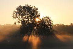 Nascer do sol através da névoa e das árvores Imagem de Stock