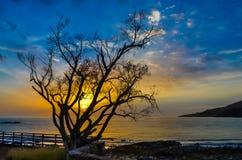 Nascer do sol através da silhueta de uma árvore Imagem de Stock Royalty Free