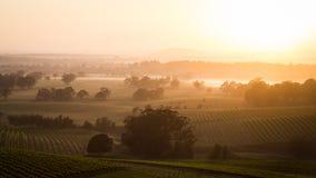 Nascer do sol através do vinhedo Imagens de Stock Royalty Free
