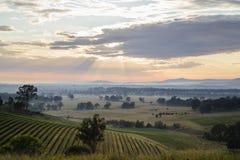 Nascer do sol através do vinhedo Imagem de Stock Royalty Free