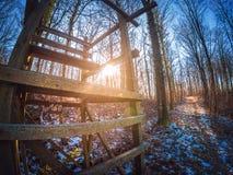 Nascer do sol bonito atrás de um assento alto na floresta Fotos de Stock
