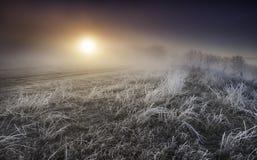 Nascer do sol bonito da manhã Fotos de Stock