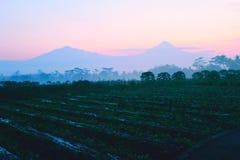 Nascer do sol bonito da manhã no campo foto de stock