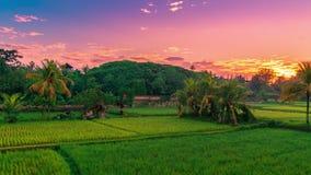 Nascer do sol bonito de Timelapse sobre os terraços do arroz de Jatiluwih em Bali, Indonésia vídeos de arquivo