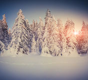 Nascer do sol bonito do inverno nas montanhas Foto de Stock Royalty Free