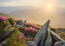 Nascer do sol bonito nas montanhas com flores Foto de Stock