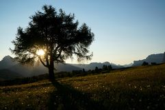 Nascer do sol bonito no cume com sol atrás de uma árvore Fotos de Stock