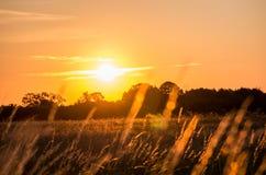 Nascer do sol bonito sobre a floresta Fotos de Stock