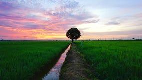 Nascer do sol bonito sobre o campo de almofada Imagem de Stock Royalty Free