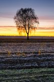 Nascer do sol bonito sobre o campo fotografia de stock royalty free