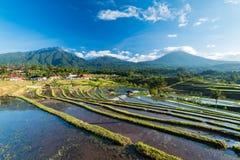 Nascer do sol bonito sobre os terraços do arroz de Jatiluwih imagem de stock royalty free