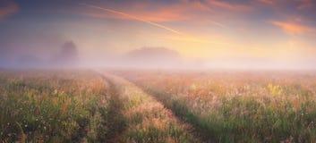 Nascer do sol brilhante no prado do outono Fotografia de Stock Royalty Free