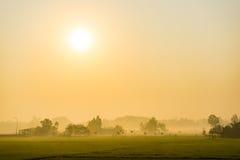 Nascer do sol cedo no arroz do vale Imagens de Stock Royalty Free
