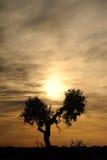 Nascer do sol com árvore Fotografia de Stock