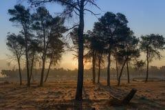 Nascer do sol com árvores Fotografia de Stock Royalty Free