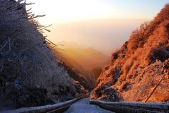 Nascer do sol com o pinho da tampa de neve Fotos de Stock
