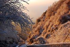 Nascer do sol com o pinho da tampa de neve Fotografia de Stock Royalty Free