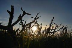 Nascer do sol com ramo seco imagem de stock royalty free