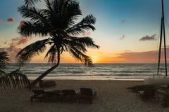Nascer do sol com a silhueta de camas de uma palmeira e do sol nas Caraíbas Foto de Stock