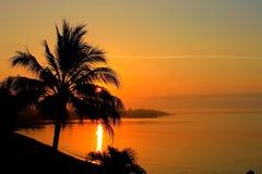 Nascer do sol com um palmtree Fotografia de Stock