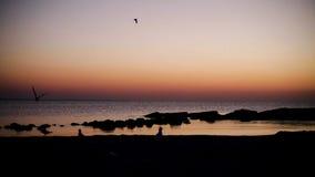 Nascer do sol cor-de-rosa bonito no mar, calma completa do por do sol, gaivotas do voo vídeos de arquivo