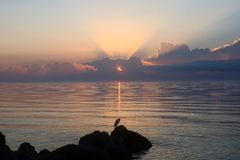 Nascer do sol cor-de-rosa que reflete na praia com um pássaro Fotos de Stock