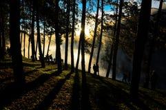 Nascer do sol da árvore de Silhouete na beira do lago fotografia de stock