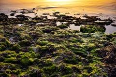 Nascer do sol da alga imagem de stock