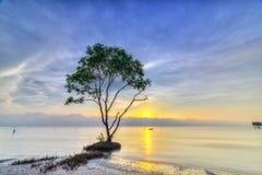 Nascer do sol da captura de Sonneratia na praia abandonada Fotos de Stock
