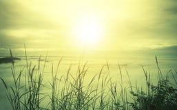 Nascer do sol da manhã com fundo fresco da natureza da mola da névoa do mar Fotos de Stock Royalty Free