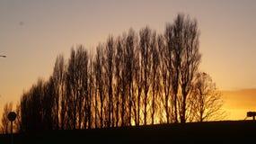 Nascer do sol da manhã em Ngaruawahia, Nova Zelândia fotos de stock royalty free