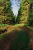 Nascer do sol da mola das árvores da estrada de floresta Fotos de Stock