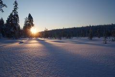 Nascer do sol da neve sobre a floresta em Lapland imagens de stock royalty free