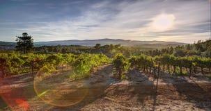 Nascer do sol da paisagem do vinhedo filme