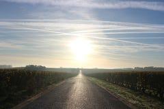 Nascer do sol da perspectiva em Wineyard em França Foto de Stock Royalty Free