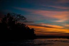 Nascer do sol da selva das Amazonas fotos de stock royalty free