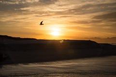 Nascer do sol da silhueta da gaivota imagens de stock