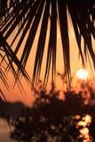 Nascer do sol de Florida através de uma fronda da palma Fotos de Stock Royalty Free